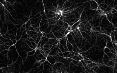 Optogenetics Controls Brain 'Switchboard' in Mice